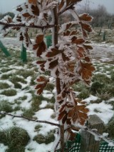 Weekly Photo Challenge:Winter
